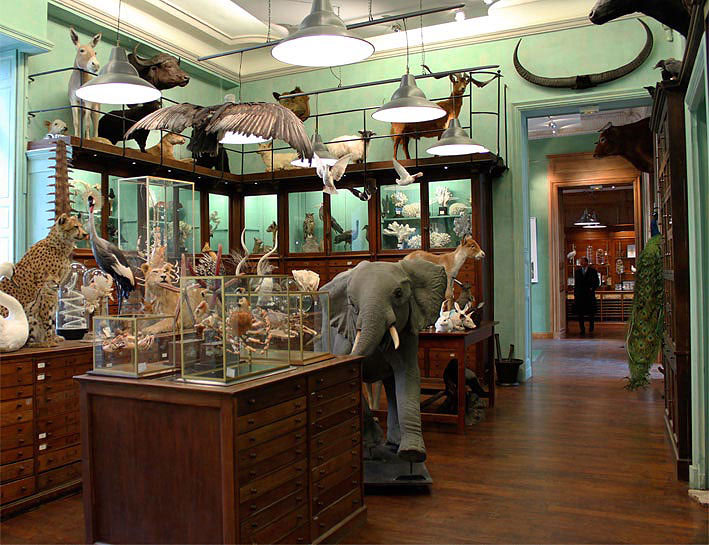 How Did The Natural History Museum Get Its Taxidermy